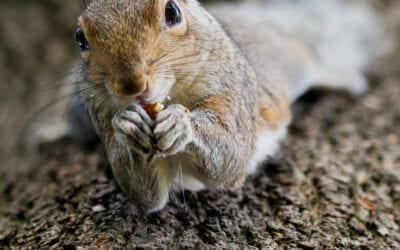 Grey Squirrels, what can we learn from them?